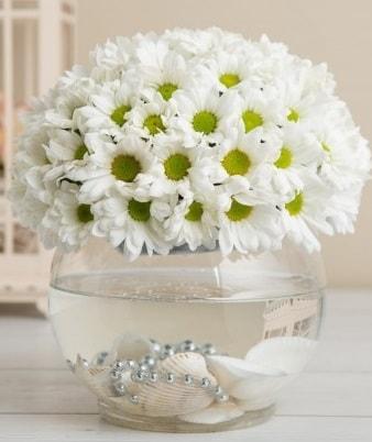 Fanusta beyaz Papatya  Bingöl Gölüm Çiçek çiçek satışı