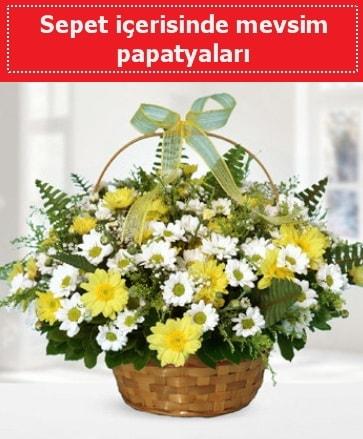 Sepet içerisinde mevsim papatyaları  Bingöl Gölüm Çiçek ucuz çiçek gönder