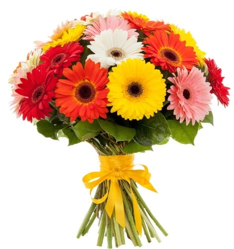 Gerbera demeti buketi  Bingöl Gölüm Çiçek çiçek satışı
