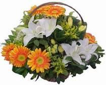 Bingöl Gölüm Çiçek online çiçekçi , çiçek siparişi  sepet modeli Gerbera kazablanka sepet