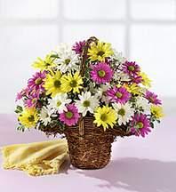 Bingöl Gölüm Çiçek çiçekçiler  Mevsim çiçekleri sepeti